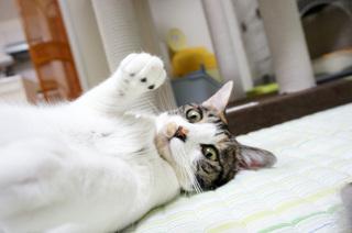 20130619猫パンチ.JPG