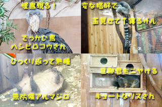20130926どうぶつ王国1.jpg