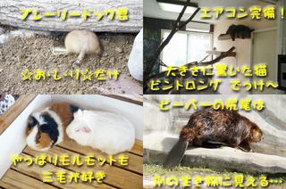 20130926どうぶつ王国2.jpg