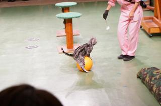 20130926猫ショー.JPG