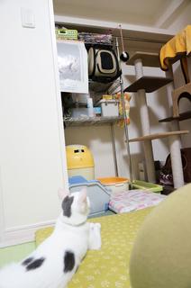 20151221おもちゃ8.JPG