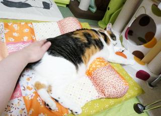 20160621猫ベッド2.JPG