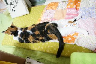 20160621猫ベッド3.JPG
