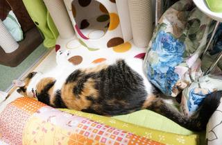 20160621猫ベッド5.JPG