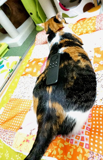 20161011のせ猫1.JPG