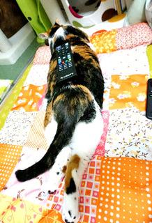 20161011のせ猫2.JPG