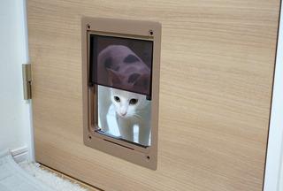 20161231猫ドア7.JPG