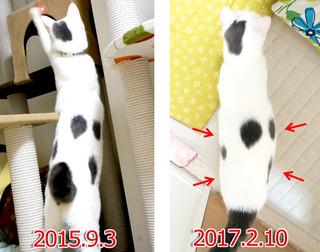 20170215カヲル比べ.jpg