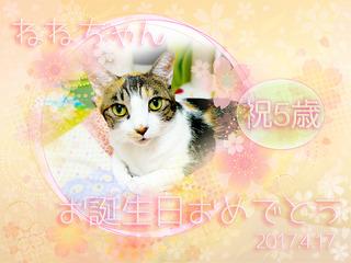 20170417ねねちゃん誕生日5歳.jpg